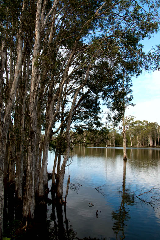 Black duck reserve
