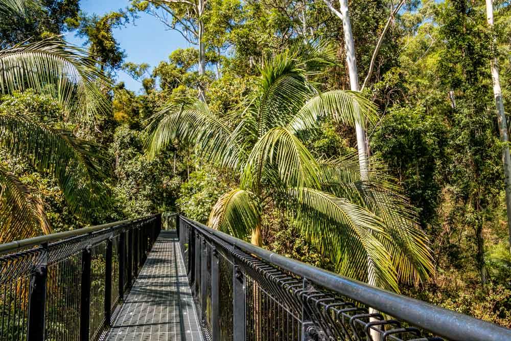 The skywalk at Mt Tamborine