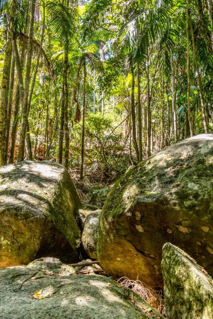 Huge boulders in the rainforest on Mt Tamborine