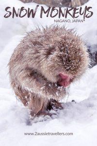 Snow monkeys Nagano Japan