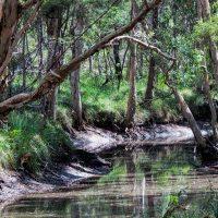 Venman Bushlands
