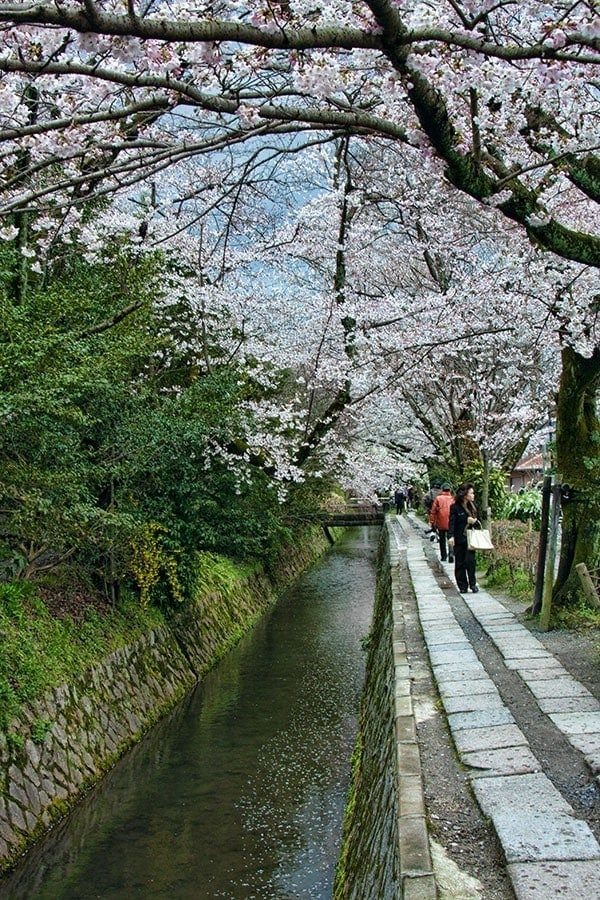 Kyotos Philosophers Path in spring