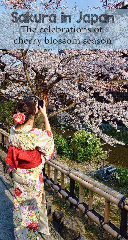 Sakura - the celebration of cherry blossoms in Japan