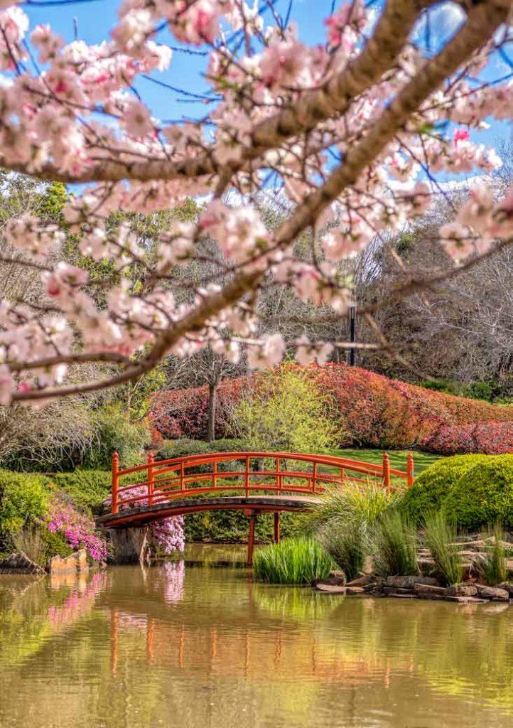 Toowoomba Japenese garden