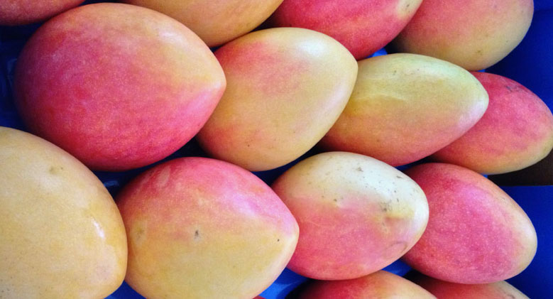 Creamy Mango Icecream | 2AussieTravellers.com