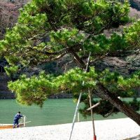 Arashiyama | www.2aussietravellers.com