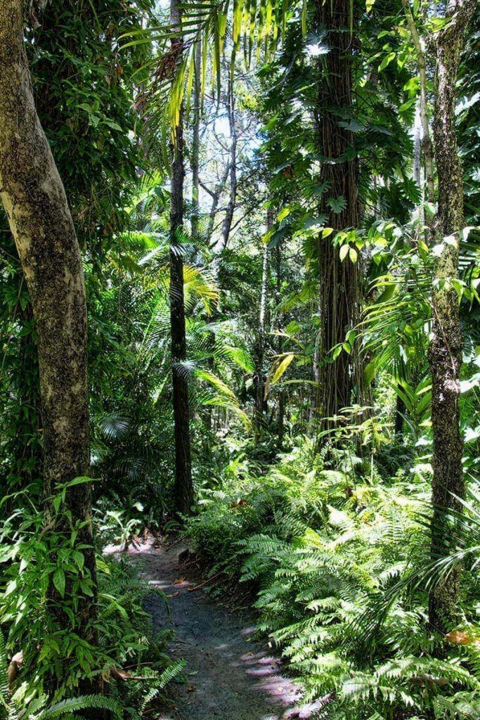 Hervey-Bay-Botanical-Gardens