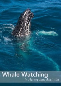 Whale Watching in Hervey Bay by 2 Aussie Travellers
