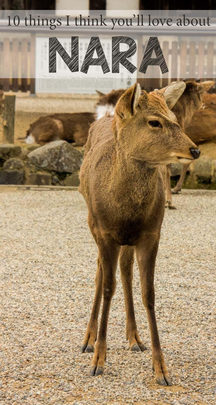 Ten reasons why Nara is one of my favourite small cities in the world
