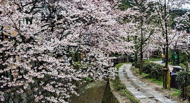 Philosophers Path in Kyoto   2 Aussie Travellers