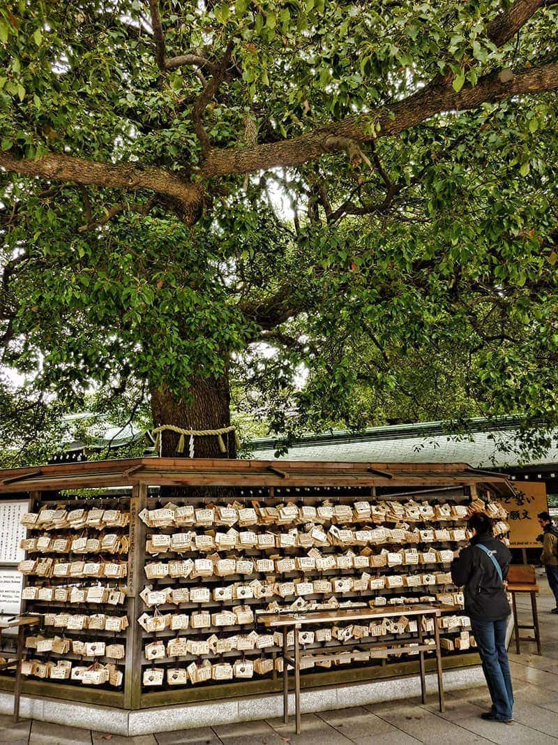 Sacred tree at Meiji Shrine | 2 Aussie Travellers