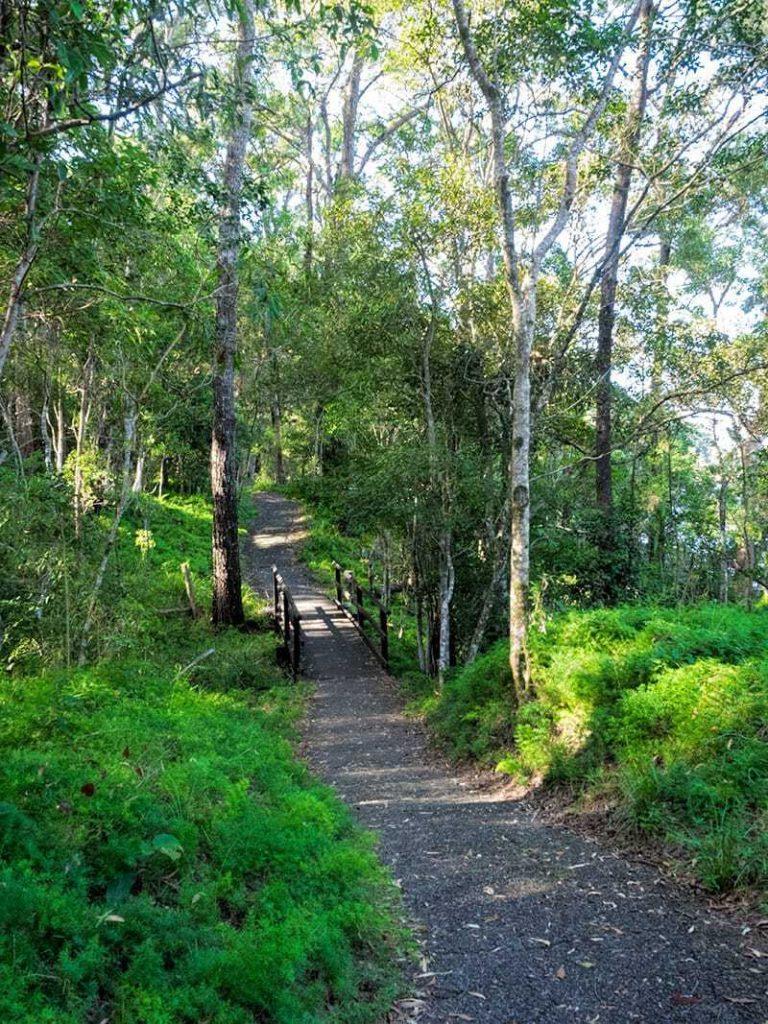 Tallebudgera Conservation Park Walk   2 Aussie Travellers