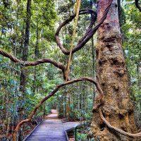 Mary Cairncross Scenic Reserve