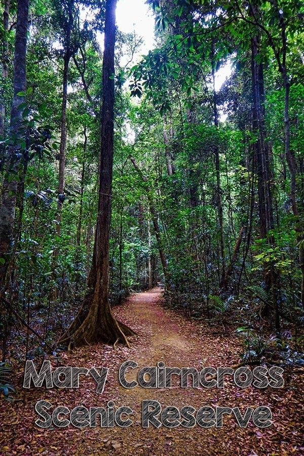 Explore the Mary Cairncross Scenic Reserve on the Sunshine Coast Hinterland, Australia