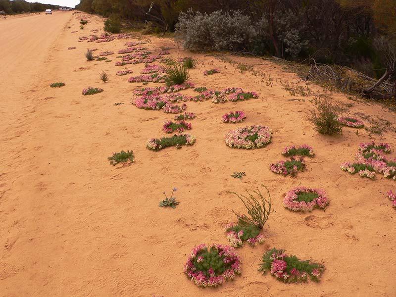 A red dirt road in Mullewa, Western Australia