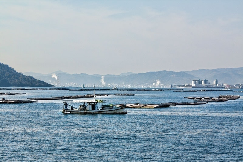 Oyster beds in the bay off Miyajima Island