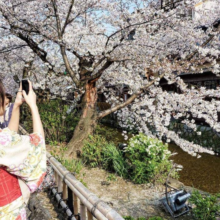The complete guide to sakura in Kyoto, Japan