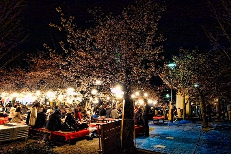 Hanami parties in Kyoto