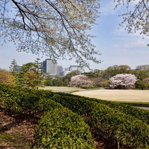 Best Japanese Gardens - Tokyo Imperial Palace