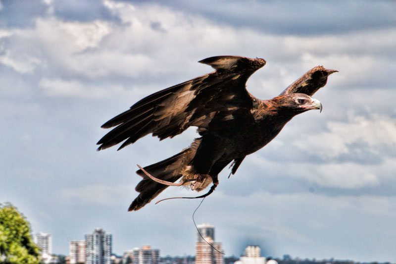 Free flight bird show at Taronga Zoo in Sydney. All the keeper talks and shows during the day are included in your entry ticket.