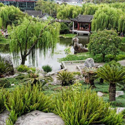 Sydney's Chinese Friendship Gardens