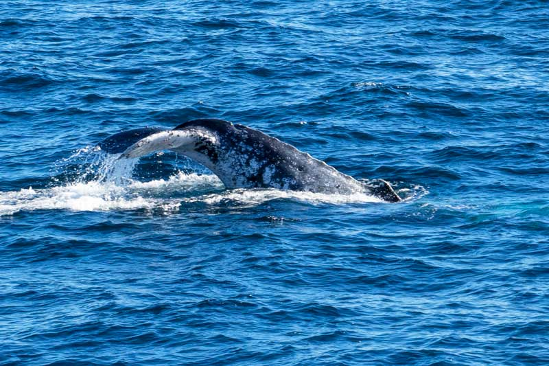 Tangalooma whale watching off Morton Island