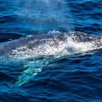 Tangalooma whale watching off Morton Island
