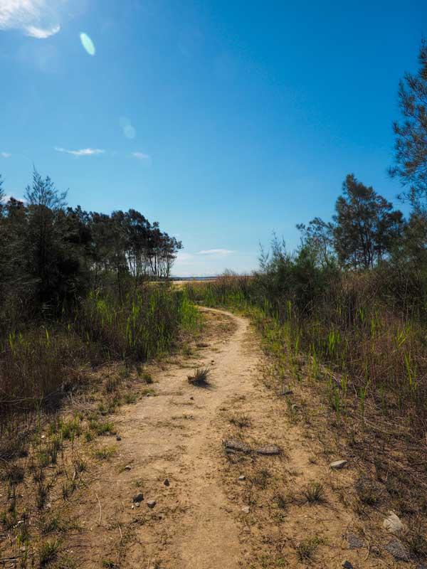 Walking track on Hickey Island
