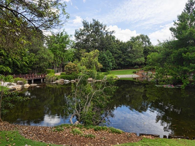 The lake at Nerima Japanese gardens