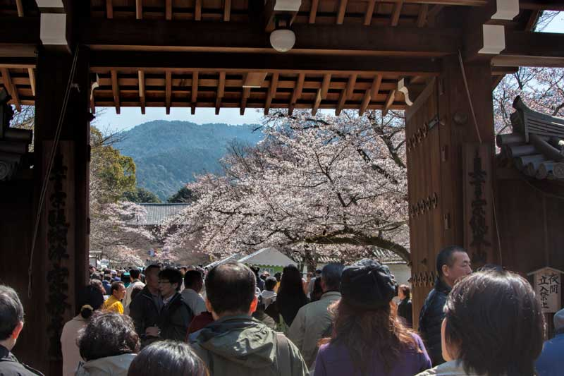 Daigoji during the festival