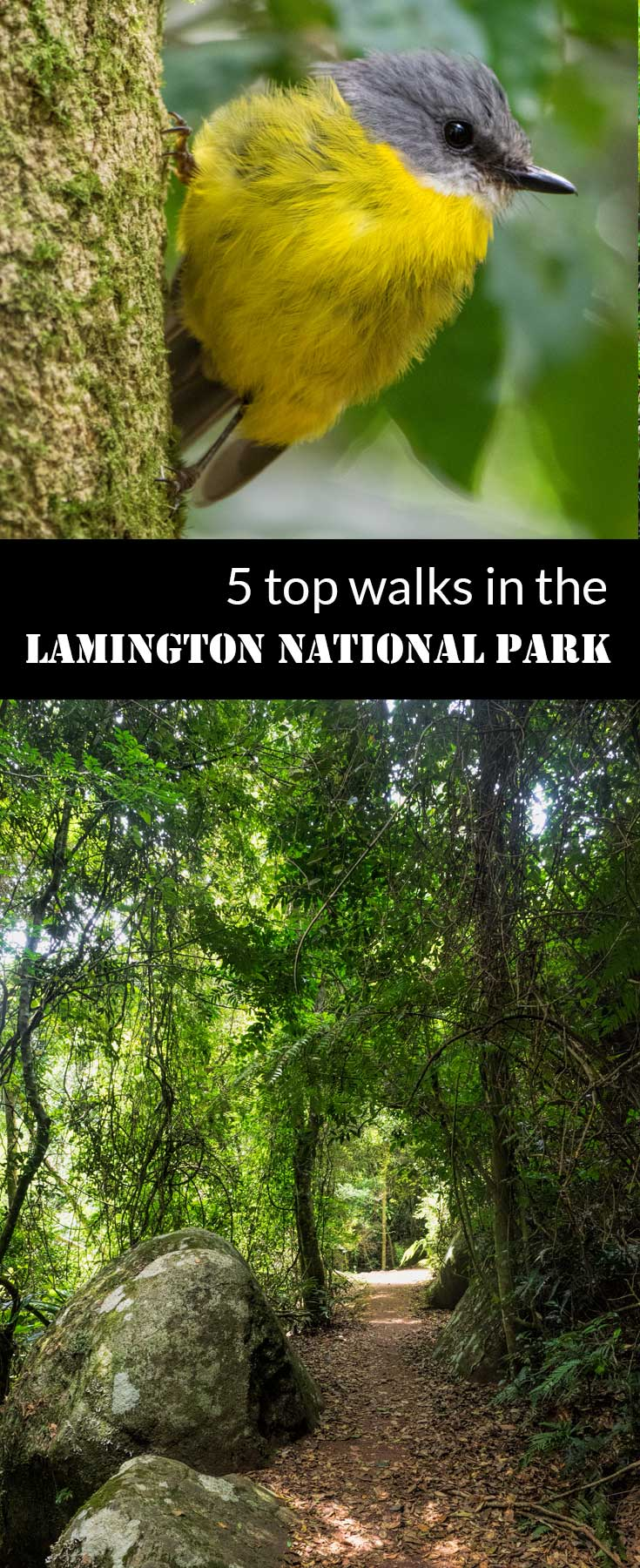 5 top walks in the Lamington National Park | Australia