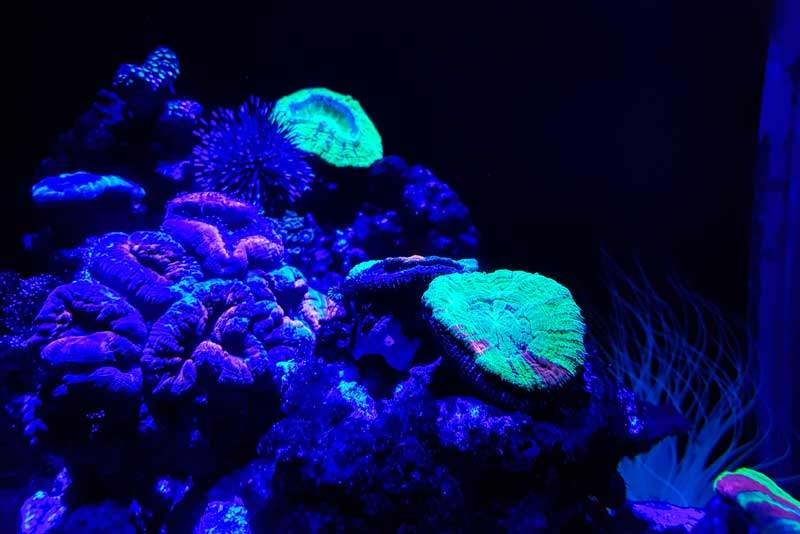 Corals and anemones at SEA LIFE
