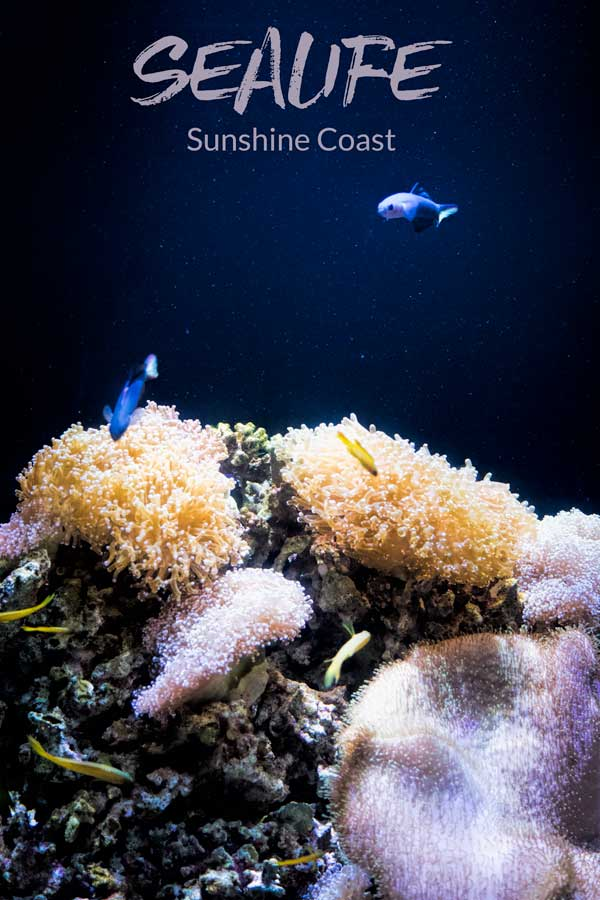 Underwater Discoveries at SEA LIFE Sunshine Coast, Australia