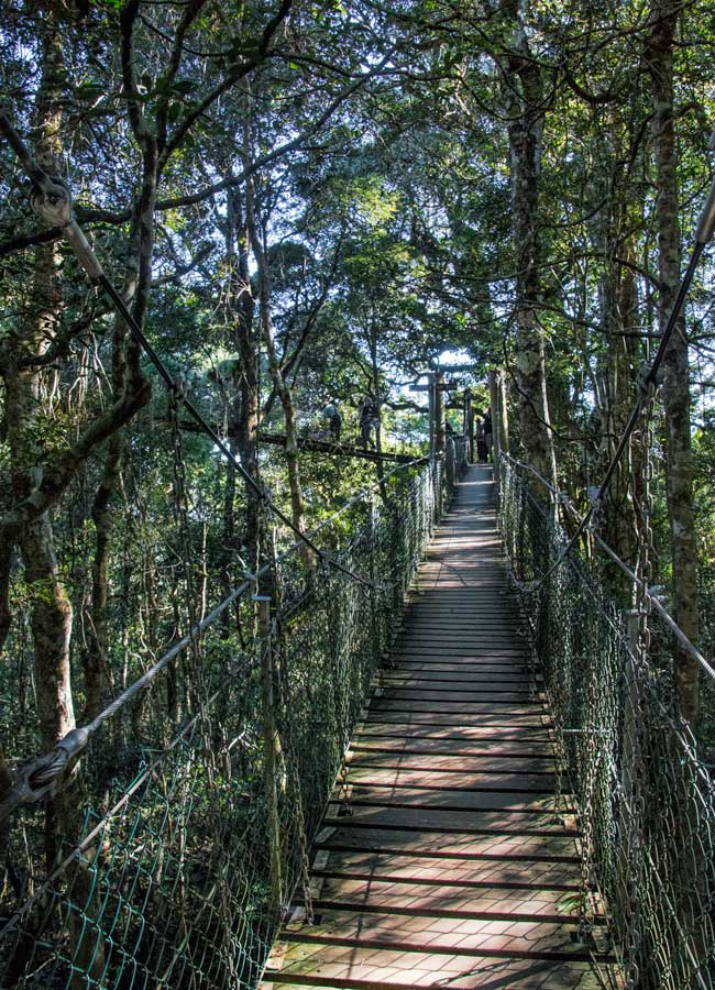 Lamington National Park Walks - Tree top walk
