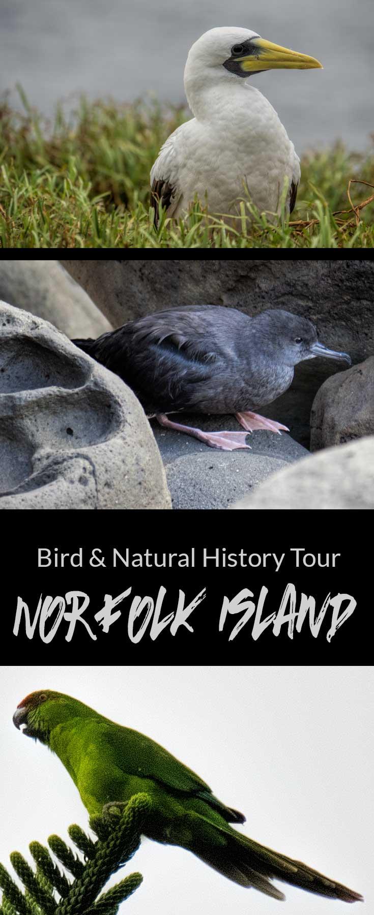 Birds and Natural History Tour, Norfolk Island, Australia