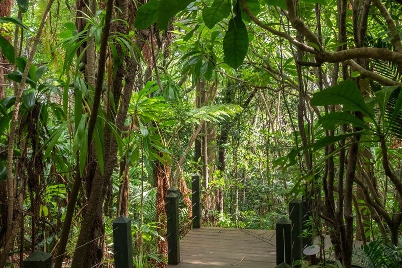 Botanic Garden Norfolk Island