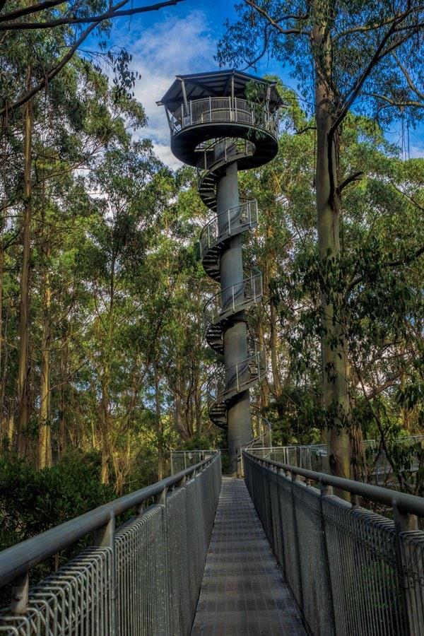 Otway Treetop Walk