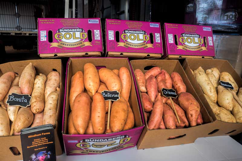 Bundaberg Sweet Potatoes