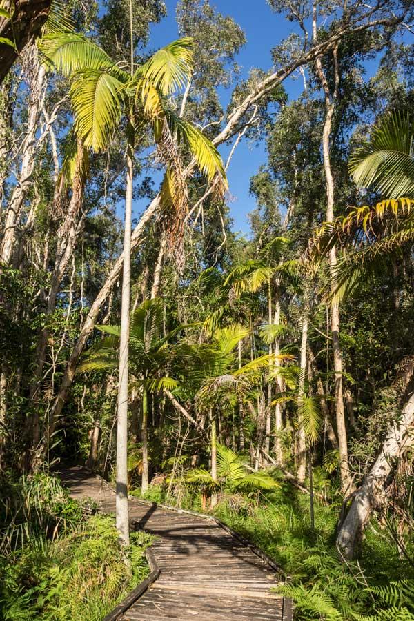 Cumbebin Swamp, Byron Bay