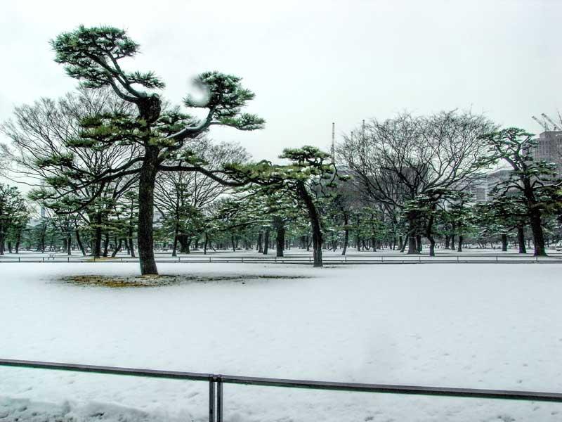 Tokyo Imperial Palace Garden Winter