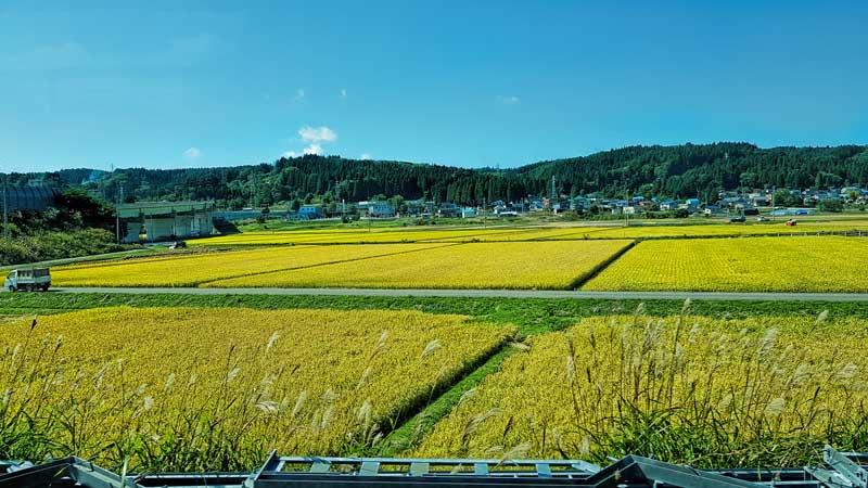 Rice fields in Aomori