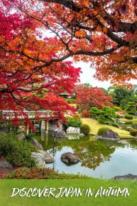 Autumn is a great time to explore Japan. #Japan #Osaka #kyoto #Tokyo