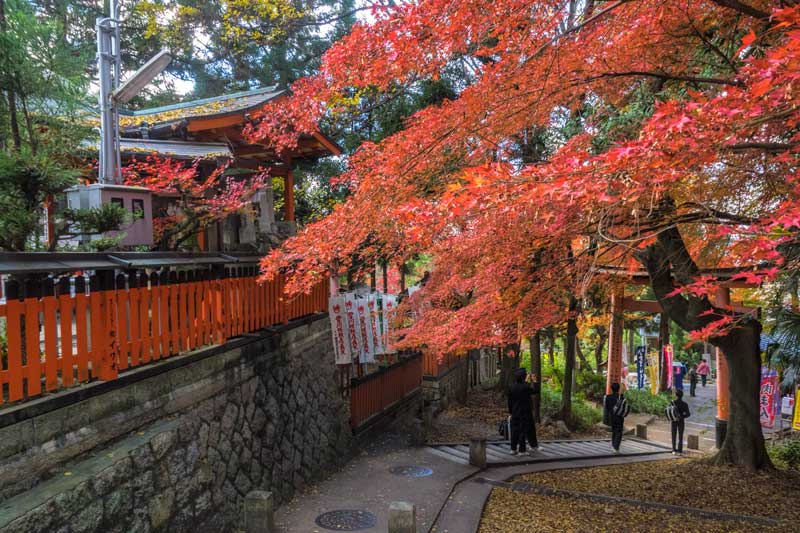 Fall colours at Fushimi Inari Shrine in Kyoto