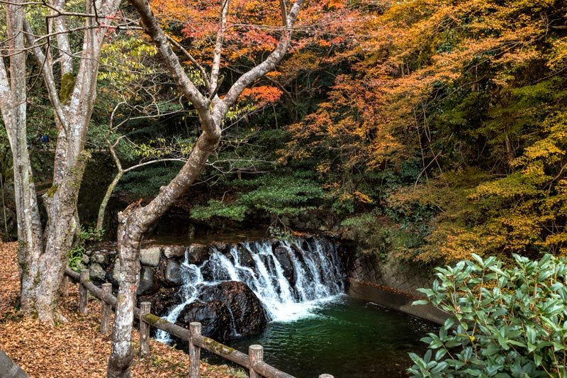 Things to do in Osaka - Minoo Park