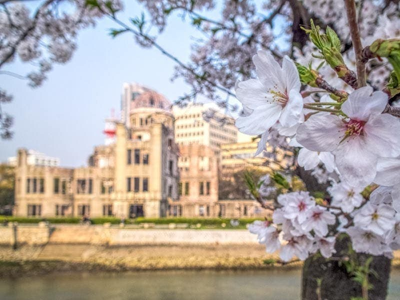 Cherry blossoms in front of A bomb dome in Hiroshima