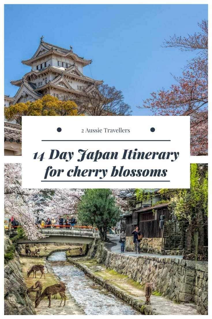 Japan itinerary for cherry blossoms