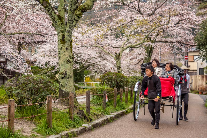 Cherry blossom on Philosophers Path in Kyoto