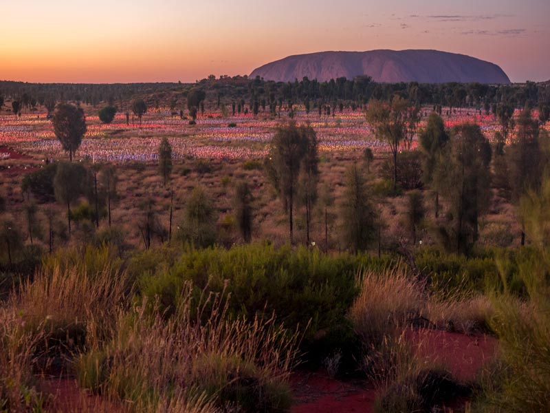 Uluru sunrise over field of lights