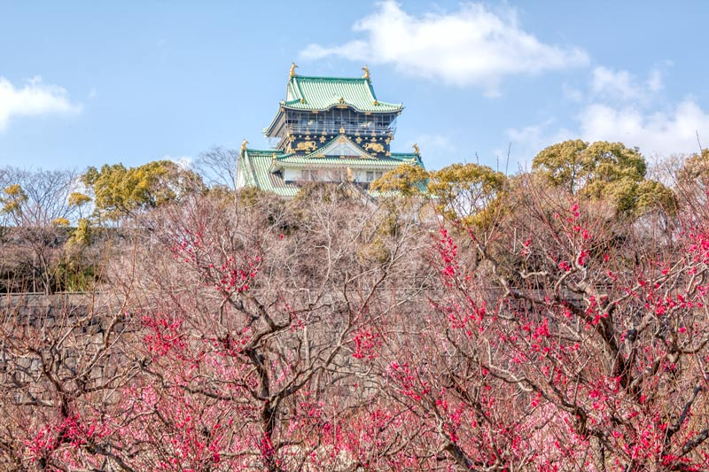 Ume in front of Osaka Castle