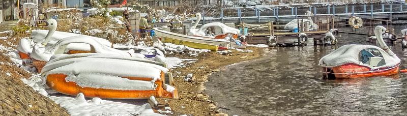 Swan boats in Japan